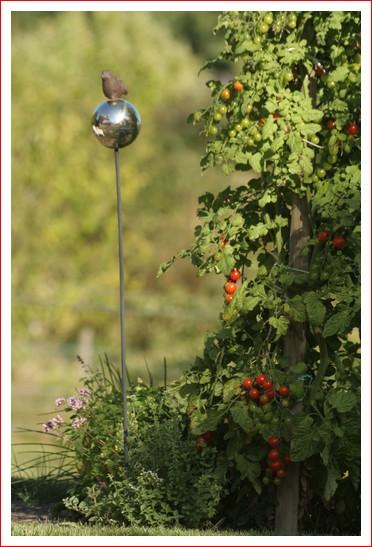 tomates de mon jardin