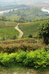 Les vignes du Piémont