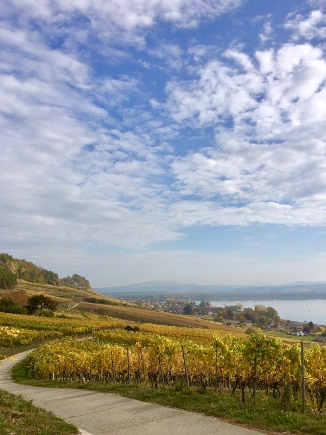 Le vignoble du Vully fribourgeois - une des plus belles régions du canton - delimoon.com