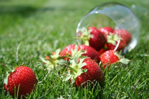 la fraise suisse -https://cledeschamps.swissmilk.ch/fr/mieux-manger/la-fraise-suisse-un-fruit-de-saison-sain-et-tendance/