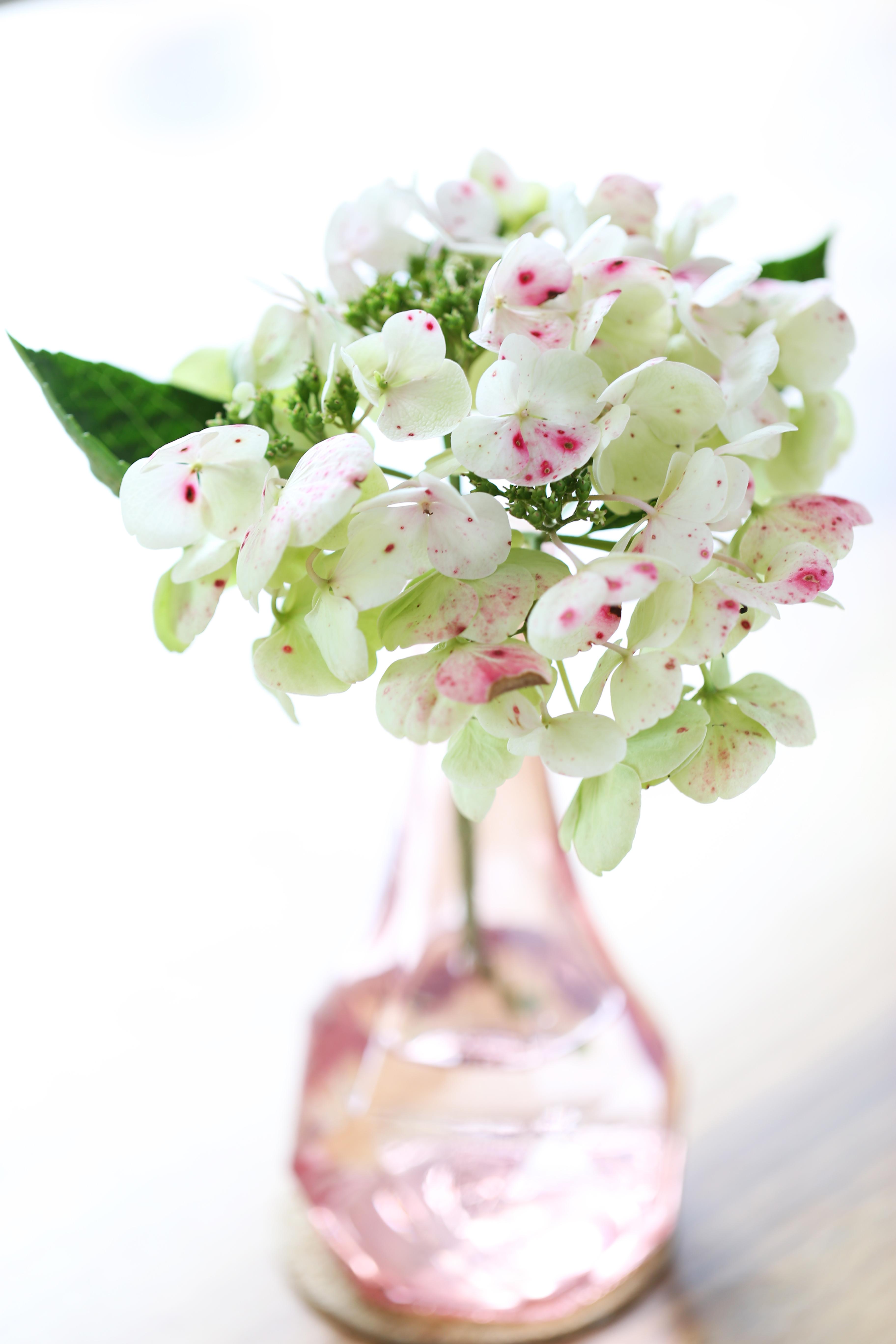 Toute chose est une fleur dont nous devons faire notre miel - delimoon.com