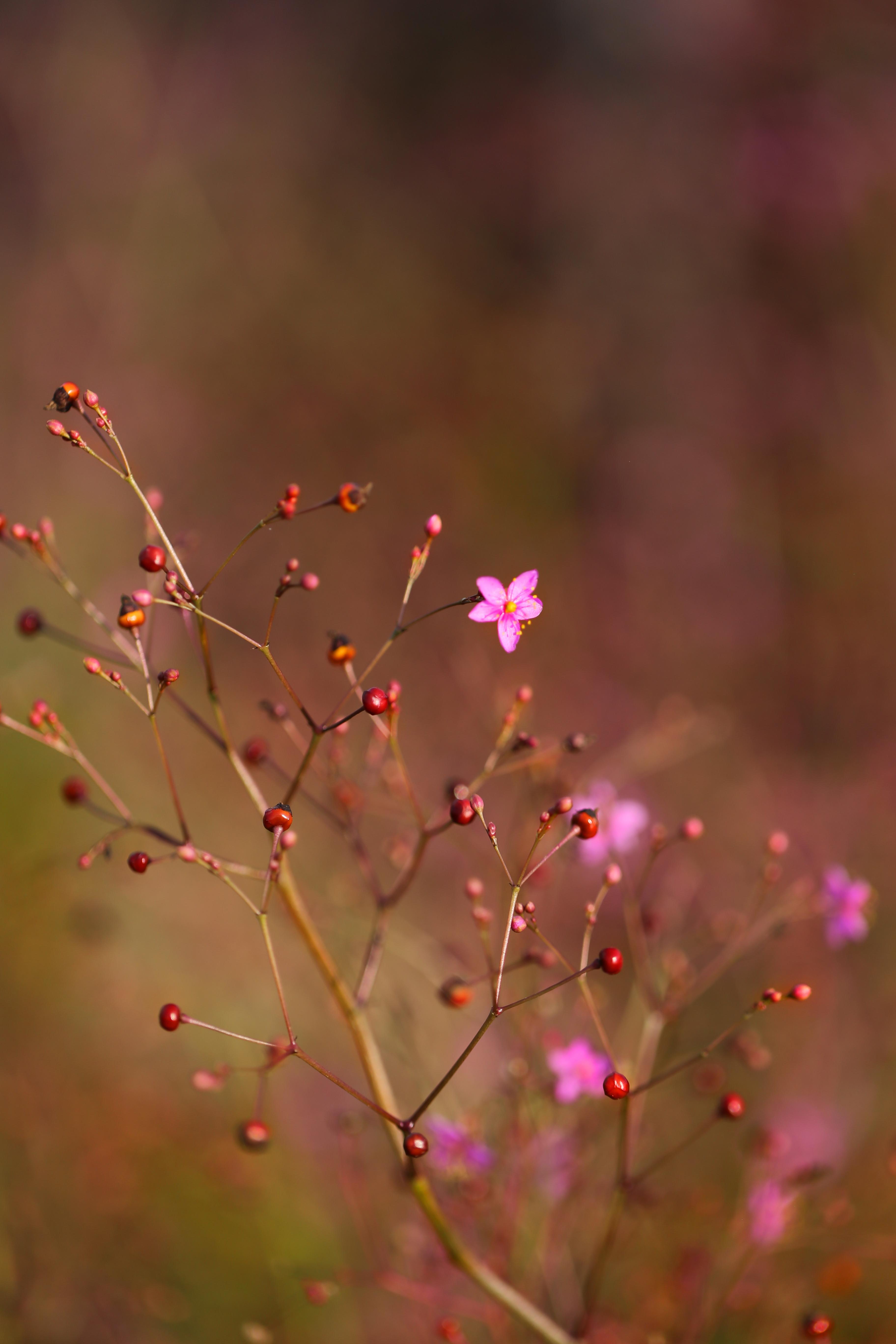 Coup d'oeil du vendredi - Delimoon.com - couleurs d'automne