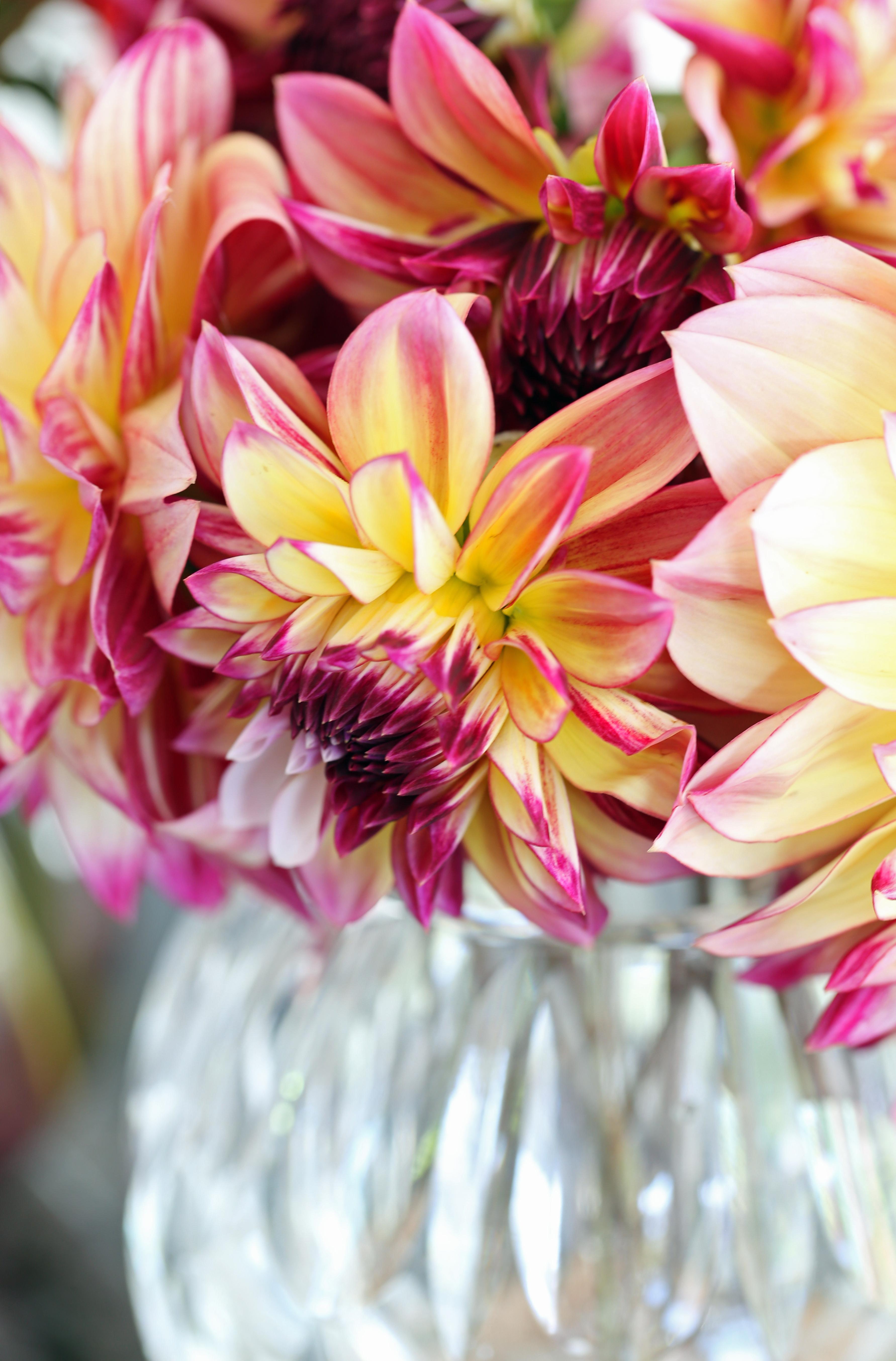 coup d'oeil du vendredi - delimoon.com - le bouquet de dahlias - comment ne pas être touché par la beauté des fleurs